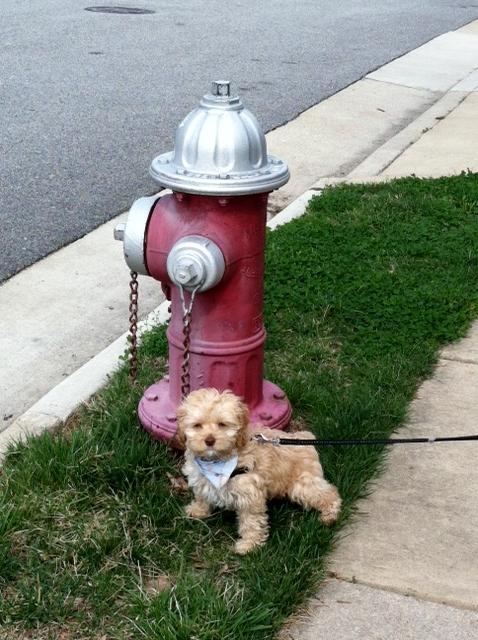 cooper hydrant.JPG